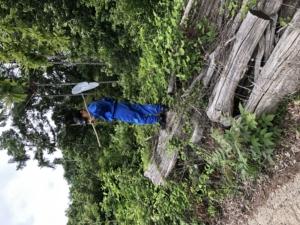 きれいにする日と息子と森へ